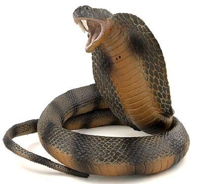 Đi tìm thuật chữa rắn cắn bằng... thần chú - ảnh 1