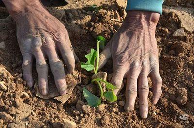 Cảm phục người nông dân mất chân vẫn làm ruộng cả đời nuôi gia đình - ảnh 1