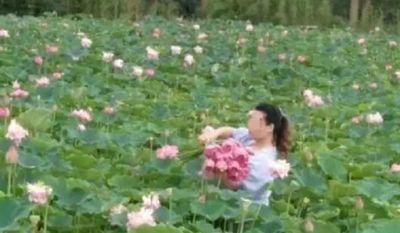 Công viên sinh thái phải đóng cửa vì du khách xông vào hái sạch hoa - ảnh 1
