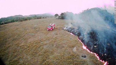 """Thịt bò đã """"đốt cháy"""" rừng nhiệt đới Amazon như thế nào? - ảnh 1"""