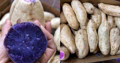Chị em sốt sình sịch mua khoai lang tím Úc giá đắt về ăn ngừa ung thư - ảnh 1
