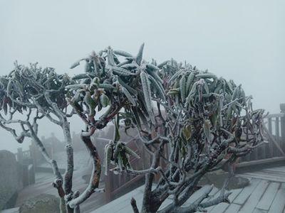 Sapa xuống dưới 0 độ, đỉnh Fansipan phủ trắng băng tuyết như trời Âu vào ngày mùng 3 Tết - ảnh 1