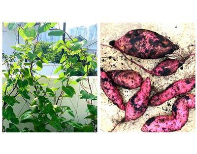 Khu vườn ngập tràn hoa thơm trái ngọt trên sân thượng rộng 500m2 của gia đình Quyền Linh - ảnh 1