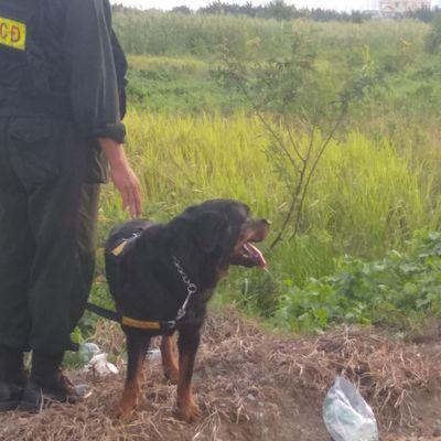 """Chó nghiệp vụ """"tóm sống"""" tên cướp trốn trong đám lau sậy ở Sài Gòn - ảnh 1"""