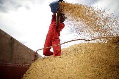 Căng thẳng thương mại kéo dài, Trung Quốc chính thức dừng nhập khẩu đậu tương Mỹ  - ảnh 1