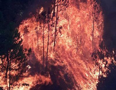 Vụ cháy rừng ở Nghệ An: Triệu tập một phụ nữ để điều tra  - ảnh 1