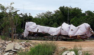 Quảng Ngãi: Tạm giữ xe tải chở cây cổ thụ dài 25 m - ảnh 1