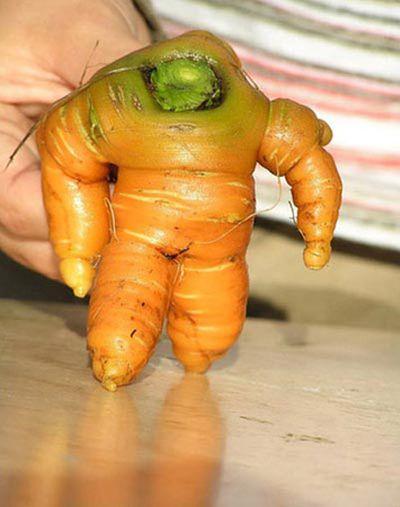 """Cận cảnh những củ cà rốt """" độc nhất, vô nhị"""" trên thế giới   - ảnh 1"""