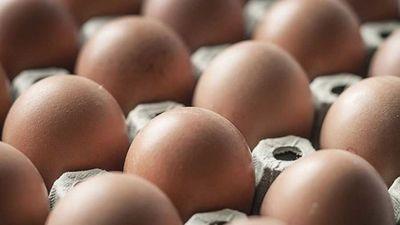 Mỹ thu hồi 200 triệu quả trứng: Những điều cần biết vế nhiễm khuẩn Salmonella - ảnh 1