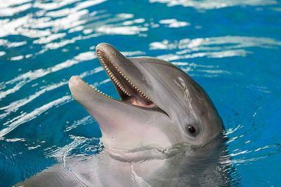 Tin tức đời sống mới nhất ngày 3/12/2019: Bơi trải nghiệm cùng cá heo, bé 10 tuổi bị tấn công dữ dội - ảnh 1