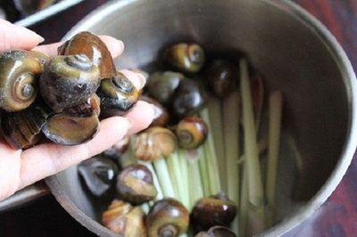 Những sai lầm chết người khi ăn ốc mà nhiều người mắc phải - ảnh 1