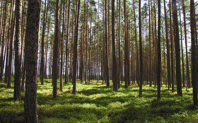 Học sinh Philippines phải trồng 10 cây xanh mới được tốt nghiệp - ảnh 1