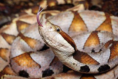 Bị rắn độc cắn, người đàn ông Trung Quốc chặt phăng ngón tay của mình  - ảnh 1