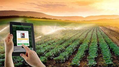 Người dân Trung Quốc đua nhau đăng ký trồng cây qua mạng Internet - ảnh 1