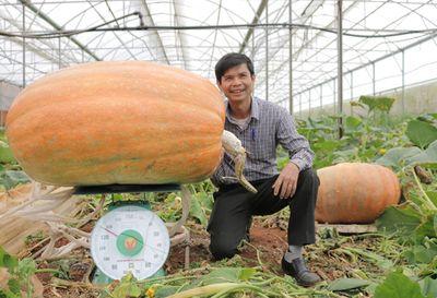 Chiêm ngưỡng quả bí ngô lớn nhất Việt Nam, dài 1,2m, nặng hơn 126 kg - ảnh 1