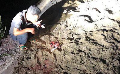 Vụ bé trai 7 tuổi bị đàn chó cắn tử vong ở Hưng Yên: Khởi tố vụ án  - ảnh 1