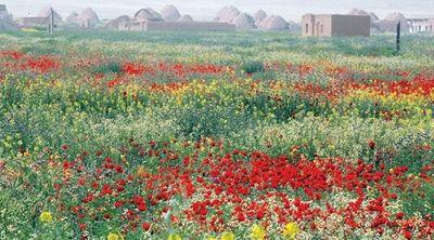 Syria: Xót xa hình ảnh hoa cỏ nở rộ trong các thành phố bị chiến tranh tàn phá - ảnh 1