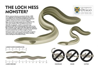 Huyền thoại hồ Loch Ness: Không tìm thấy 'ADN quái vật' - ảnh 1
