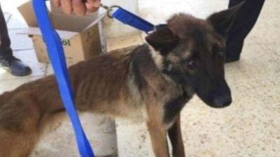 Chó nghiệp vụ Mỹ gửi đến Jordan gầy trơ xương, chết dần vì điều kiện nghèo nàn - ảnh 1