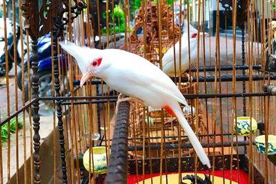 """Dàn chim """"khủng"""" xuất hiện giữa phiên chợ Nông sản và thông điệp cần suy ngẫm - ảnh 1"""