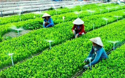 Kinh tế hợp tác, bản chất của Hợp tác xã nông nghiệp và lợi ích mang lại - ảnh 1