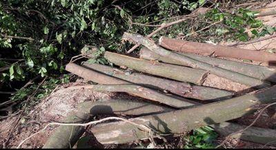Chí Linh, Hải Dương: Cần làm rõ nghịch lý rừng dẻ bị