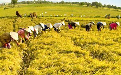 Tăng cường năng lực lao động nông thôn phục vụ khởi nghiệp nông nghiệp công nghệ cao, tham gia chuỗi giá trị nông sản toàn cầu (Phần I) - ảnh 1