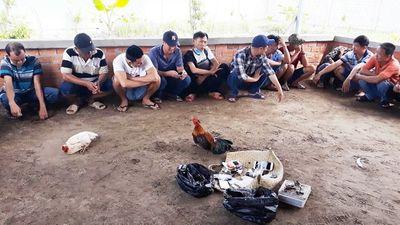 Bắt quả tang hàng chục đối tượng đá gà ăn tiền phía sau căn biệt thự ở Vĩnh Long - ảnh 1