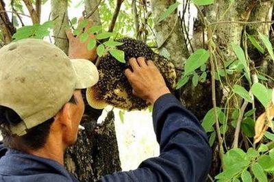 Hà Tĩnh: Vào rừng lấy mật ong, người đàn ông tử vong thương tâm - ảnh 1