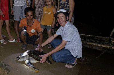 """Quảng Trị: Phát hiện rùa biển 15kg """"đi lạc"""" vào sông Hiếu - ảnh 1"""