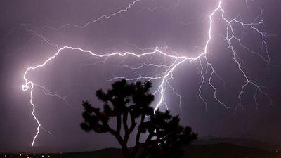 Bình Định: Trú mưa dưới gốc cây lớn, 3 phụ nữ bị sét đánh tử vong thương tâm - ảnh 1