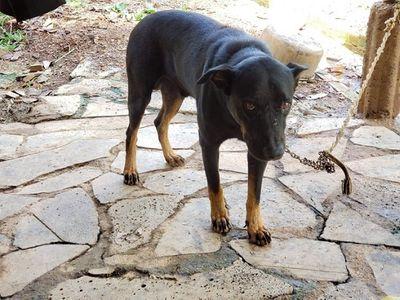 Vụ nghi báo đen xuất hiện ở Đồng Nai: Phát hiện nhiều dấu chân chó tại hiện trường - ảnh 1