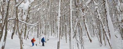 """Du lịch Nhật Bản mùa đông: đừng bỏ qua """"thiên đường"""" trượt tuyết Fukushima  - ảnh 1"""