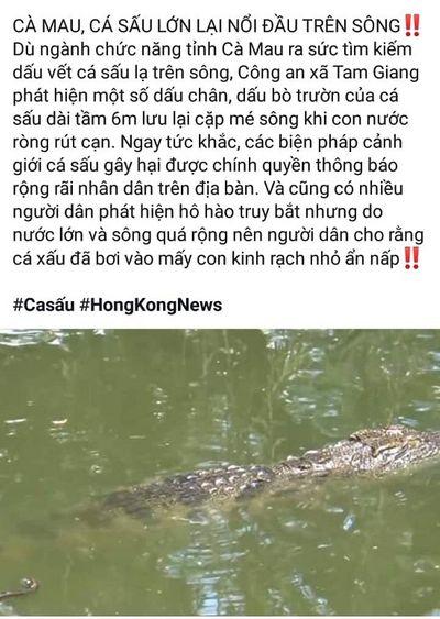 Sự thật thông tin cá sấu lớn nổi đầu trên sông ở Cà Mau - ảnh 1