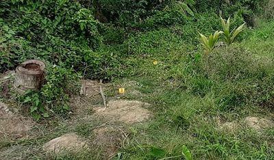 Tiền Giang: Đi thăm vườn, người đàn ông nguy kịch vì vướng vào bẫy điện của hàng xóm - ảnh 1