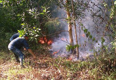 Lửa bùng phát tại 5ha rừng trồng ngay sát sân bay Đà Nẵng - ảnh 1