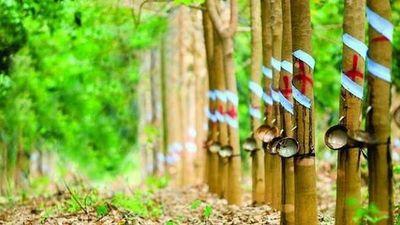 Nhận 456 tỷ động đền bù đất dự án KCN Nam Tân Uyên, công ty mẹ Cao su Phước Hòa (PHR) báo lãi tăng đột biến - ảnh 1