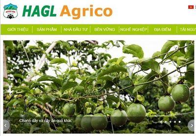 HAGL Agrico vẫn là công ty con của Tập đoàn HAGL  - ảnh 1