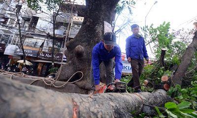 Chặt bỏ 6.700 cây xanh: Nhà báo Trần Đăng Tuấn viết thư ngỏ gửi Chủ tịch Hà Nội