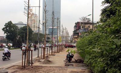 Chặt 6700 cây ở Hà Nội: Yêu cầu đình chỉ hàng loạt cán bộ