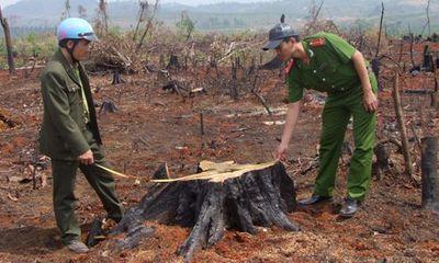Điều tra, làm rõ vụ hủy hoại 23ha rừng ở Đắk Nông