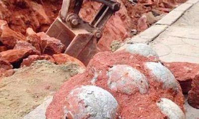 Bất ngờ đào được 43 quả trứng khủng long hóa thạch khi đào đường