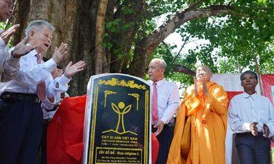 Công nhận cây bồ đề 132 tuổi là Cây di sản VN