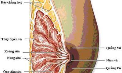Bộ Y tế yêu cầu dừng việc ghép tế bào gốc điều trị ung thư vú