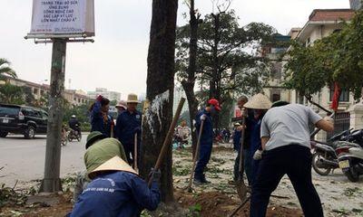 Vụ chặt cây xanh Hà Nội đã có kết luận xử lý chính thức