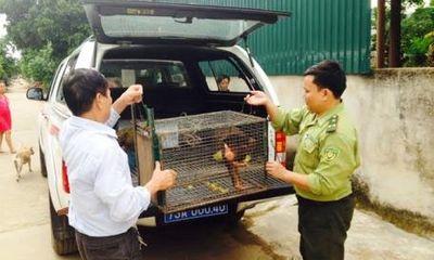 Tài nguyên - VQG Phong Nha – Kẻ Bàng tiếp nhận cá thể khỉ mắt đỏ quý hiếm