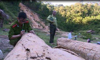 Tài nguyên - Ai 'bật đèn xanh' cho lâm tặc rầm rộ khai thác rừng?