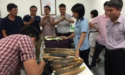 Tài nguyên - Thu giữ hơn 100kg ngà voi, sừng tê giác nhập lậu tại sân bay Nội Bài