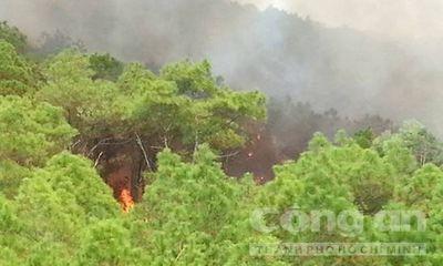 Nghệ An lại cháy rừng thông sát biển