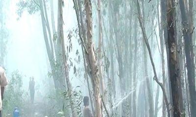 An Giang huy động 500 người khống chế đám cháy 20ha rừng tràm